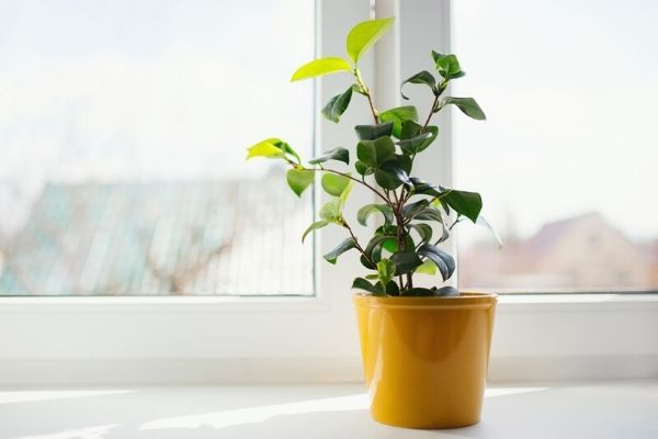 8 Houseplants That Can Tolerate Direct Sunlight ...